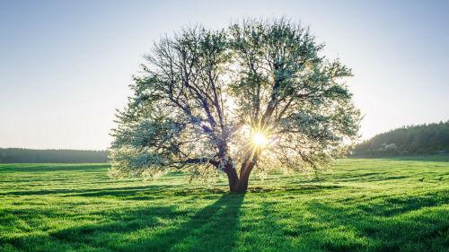 дерево зеленое во сне