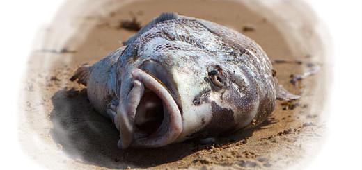 к чему снится дохлая рыба