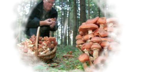 к чему снится грибы собирать