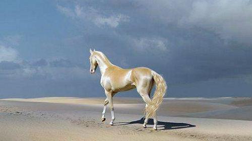 К чему снится лошадь женщине сонник миллера