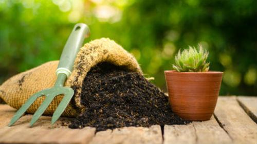 сажать комнатное растение