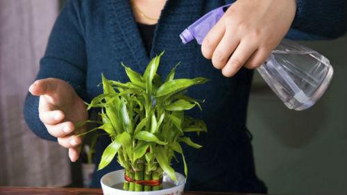 поливать растение