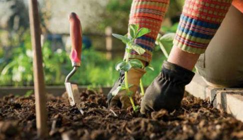 когда садить рассаду
