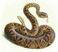 К чему снится черная змея нападает фото