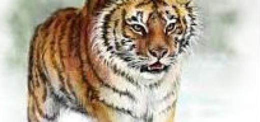 тигр во сне