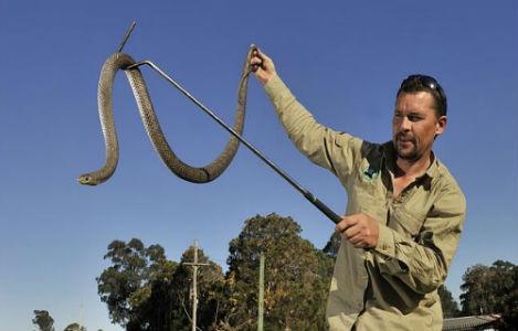 змея в руках