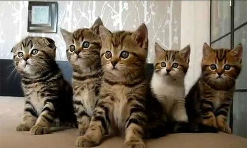сонник коты