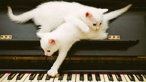 много белых котят
