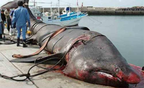 к чему снится мертвая большая рыба
