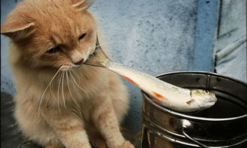 Есть рыбу во сне