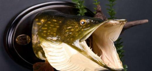 Голова рыбы толкование сонника