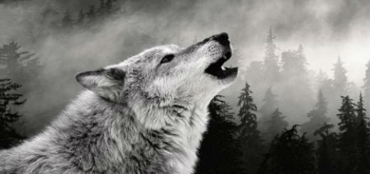 Волчица толкование сонника