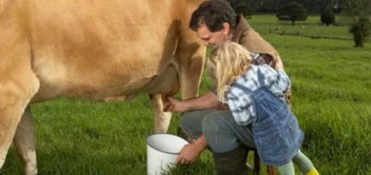 сонник доить корову