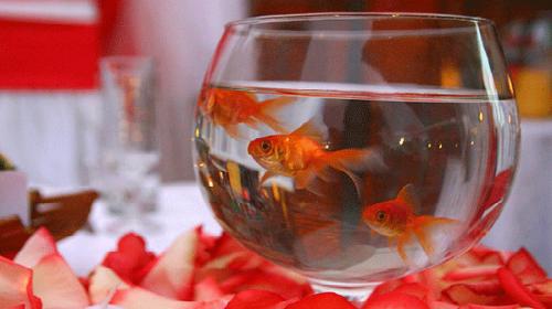 кормить рыбок во сне