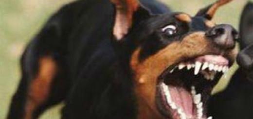 к чему снится черная собака гонится