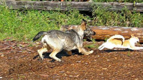 Фото Сонник злая собака кидается
