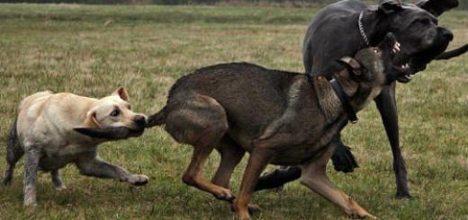 сонник собаки дерутся