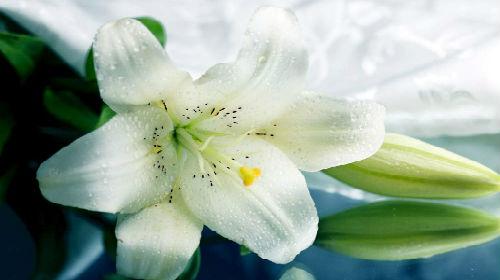к чему снятся белые лилии