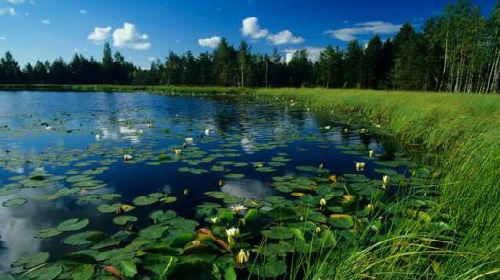 болото к чему снится