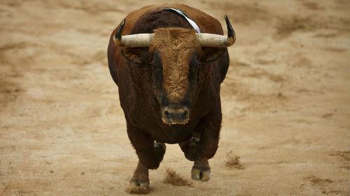 к чему снится что бык гонится