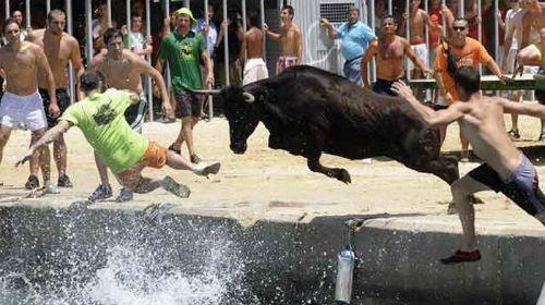бык гонится