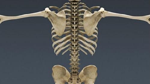 человеческий скелет во сне