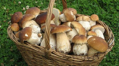 к чему снится собирать белые грибы
