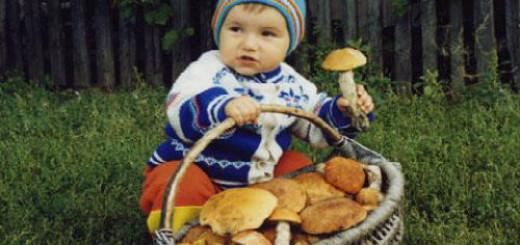 сонник собирать грибы