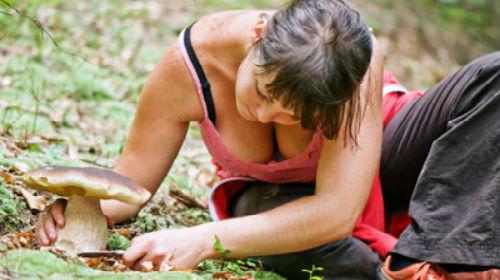 к чему снится собирать грибы женщине