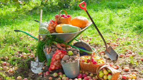 сад и огород в сентябре