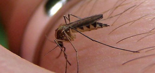 комары во сне