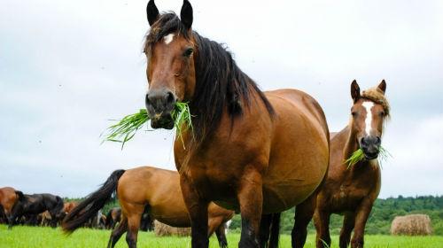 сонник кони лошади