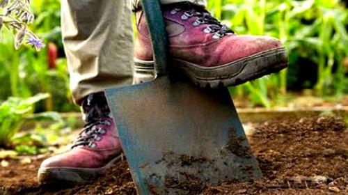 к чему снится копать картошку лопатой