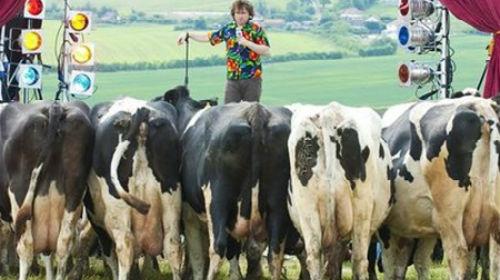 пасти стадо коров
