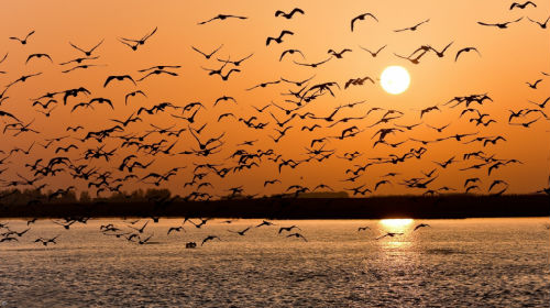 к чему снится стая птиц