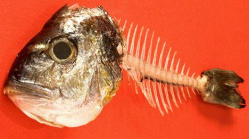рыбные кости