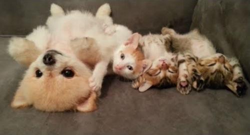котята со щенком во сне