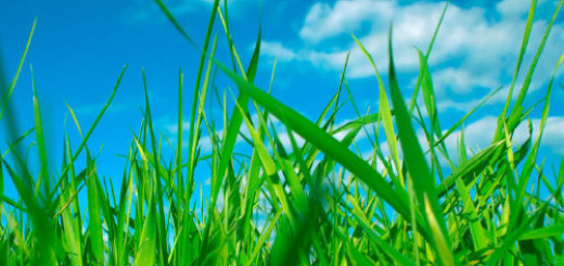 зеленая трава во сне