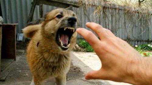 Сонник злая собака на цепи фото