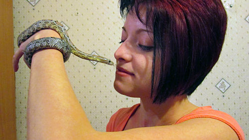 к чему снится змея в доме женщине