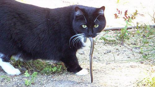 убить змею в доме