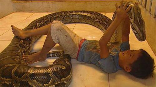 змея в доме во сне