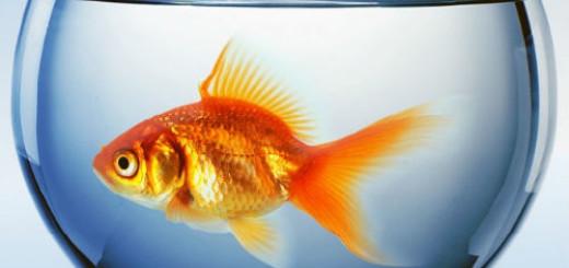 золотая рыбка в аквариуме во сне