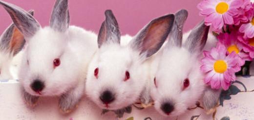 к чему снятся маленькие кролики много