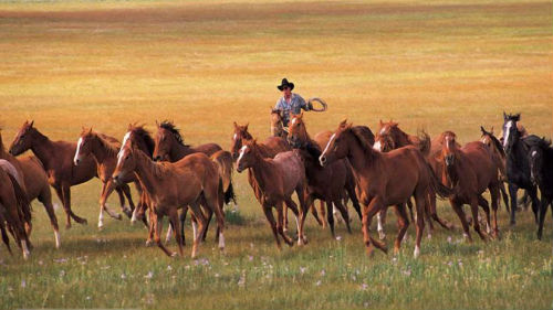 приснился табун лошадей мужчине
