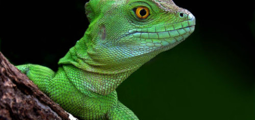 ящерица зелена во сне