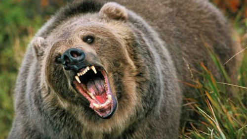большая медведица