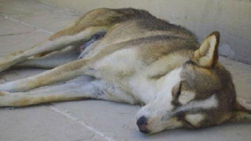 к чему сниться мертвая собака мужчине