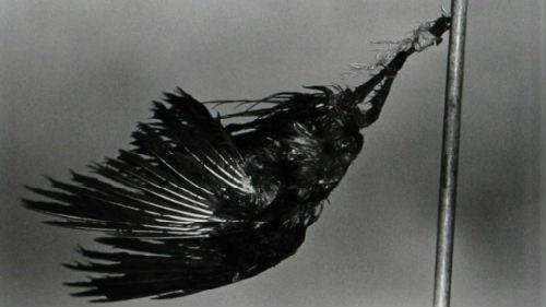 умершая птица