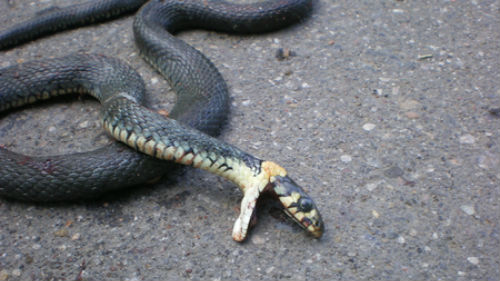 неживая змея